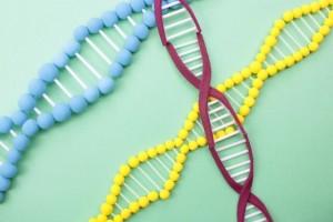ワキガ 原因 遺伝